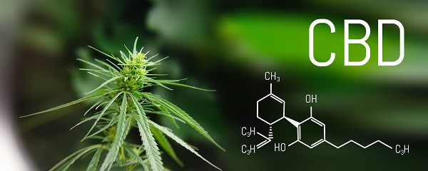 Hemp plant with CBD written across the top and chemical compound on the bottom of the image
