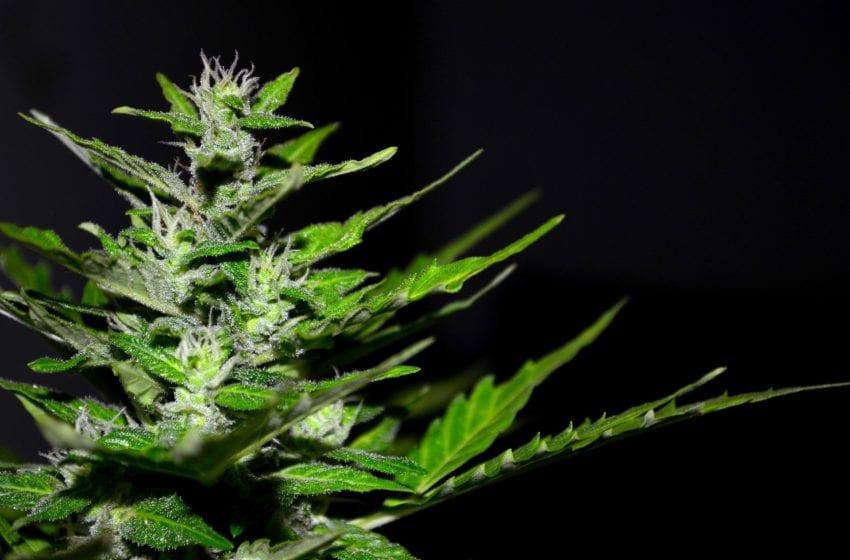 Vaping CBD, THC May Cause 'Modest' Driving Impairment