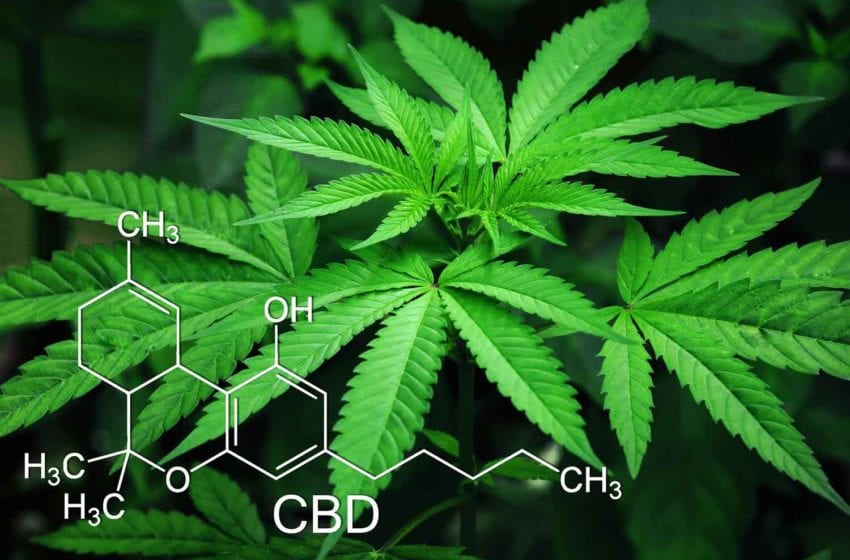 22nd Century Gets Patent for Cannabis GMO Technology