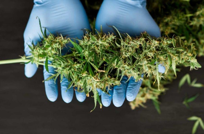 BAT, Organigram Team up on Next-Gen Cannabis Products
